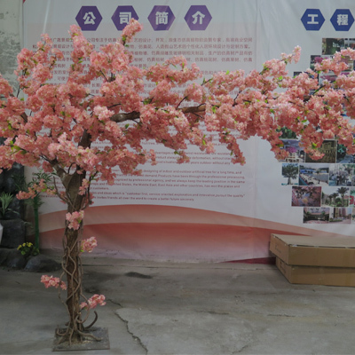 Awesome cherry blossom tree for sale