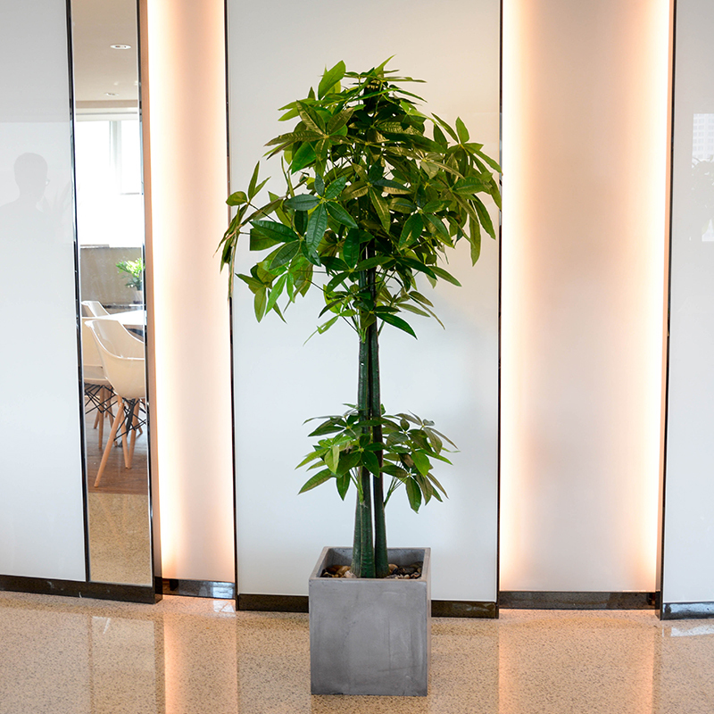 artificial bonsai of Money tree