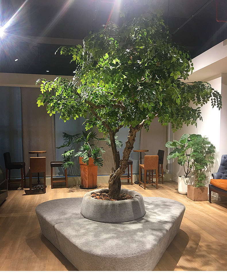 ornamental ficus tree