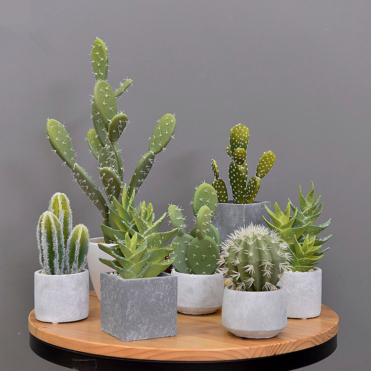 artificial cactus and succulent plants
