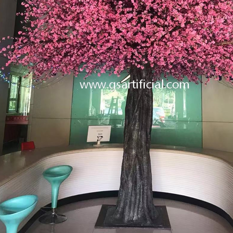 5m high large tree pink peach blossom tree