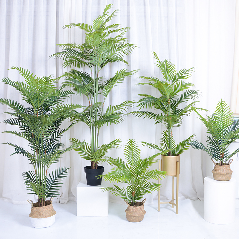 Tropical Palm Bush plants