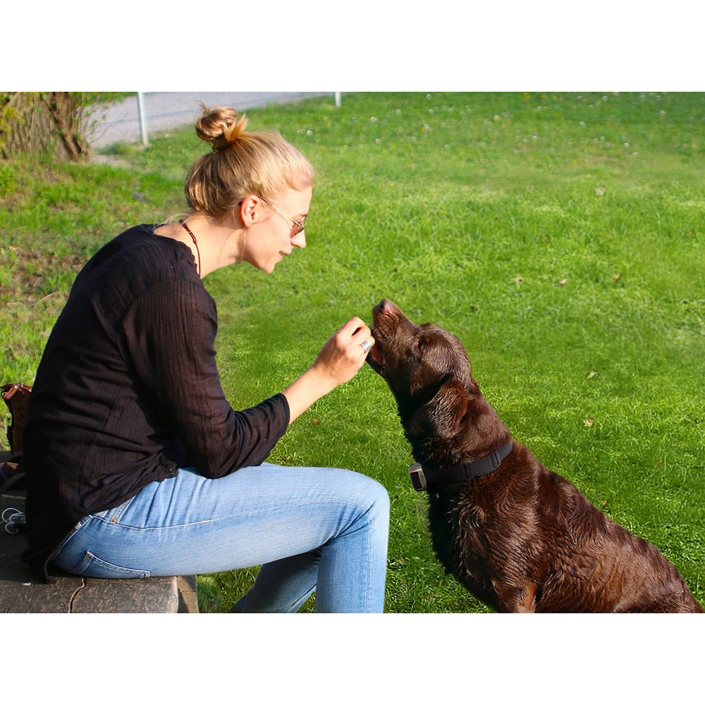 A + Trainer Hundetrainings-Kragen Auto Anti Bellen Halsbände