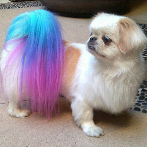 Temporary Hair Color Spray for Pet