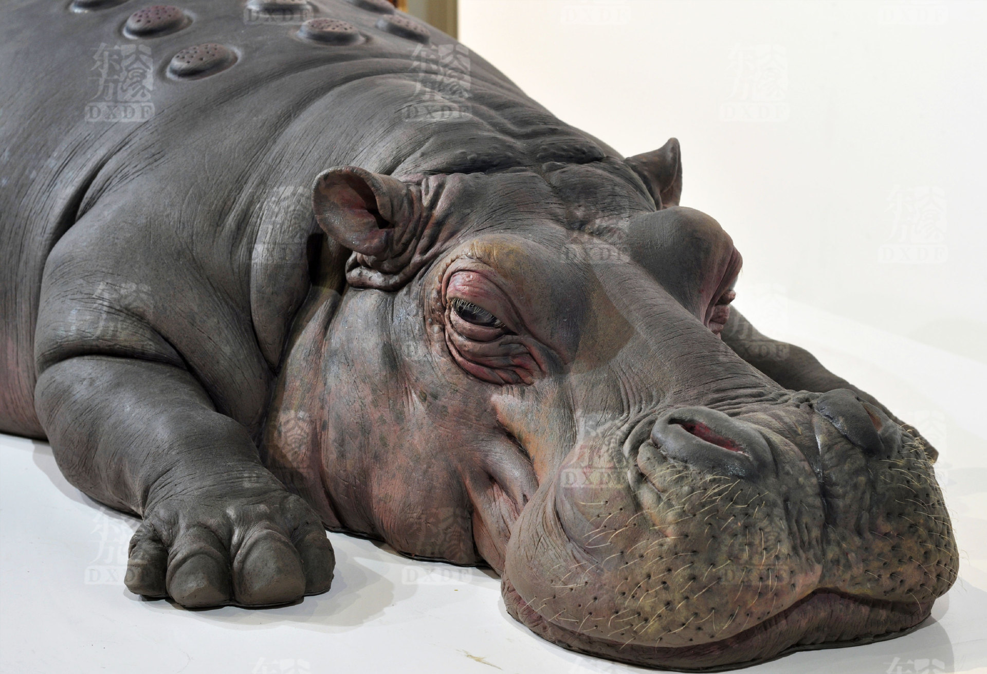 Giant Lifelike Sculptures of Hippo